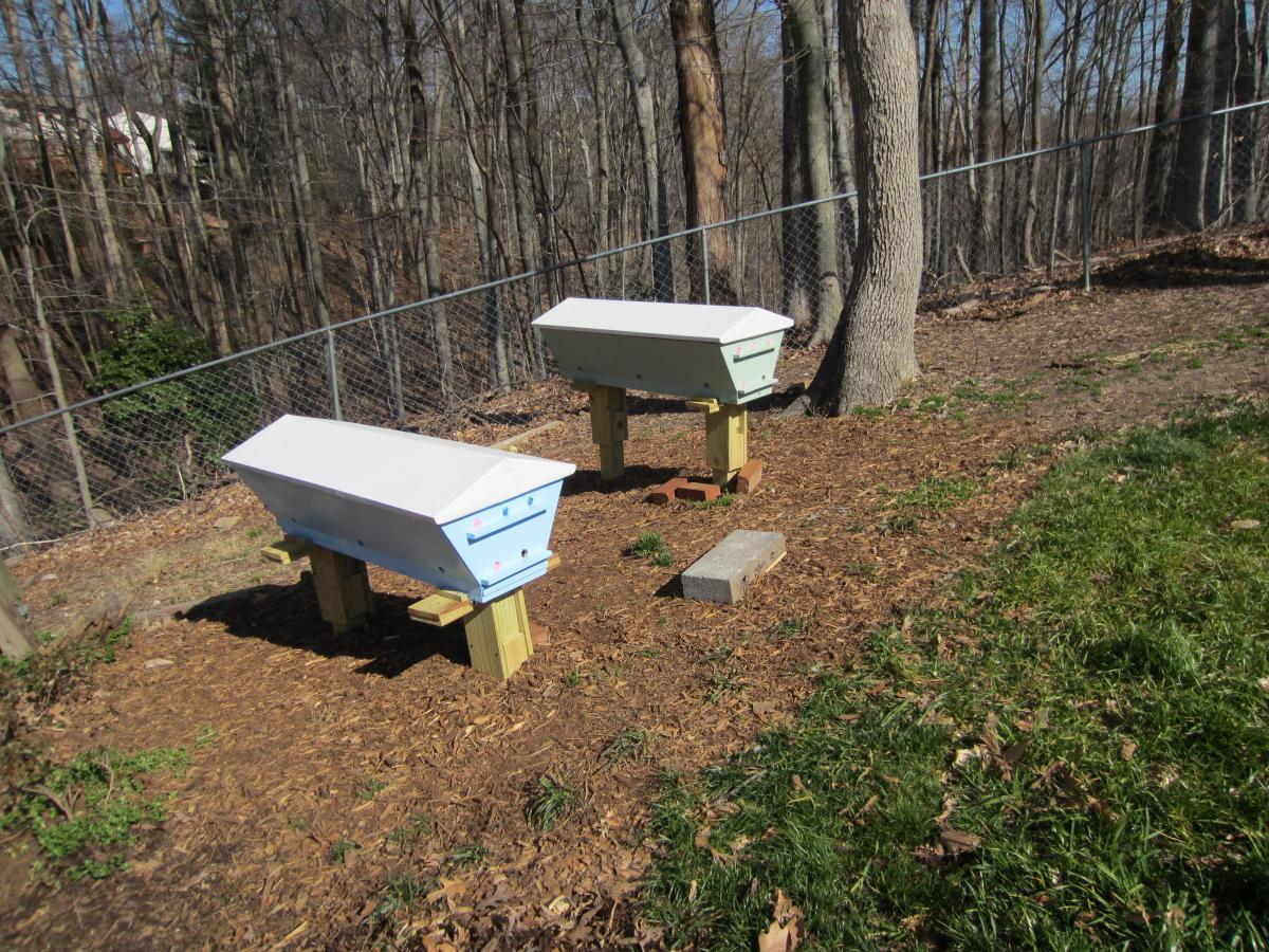 Top Bar Hives APR 2013 001.JPG