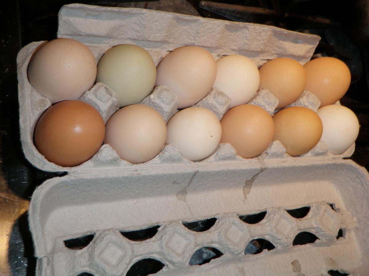 Jumbo Chicken Eggs.JPG