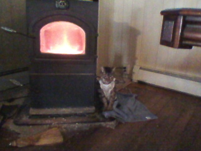 cat and the stove.jpg
